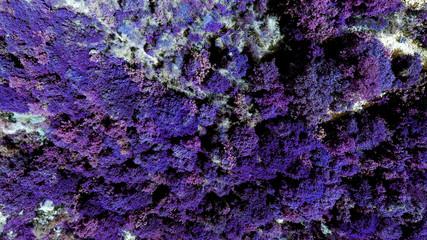 Foto auf Gartenposter Violett Aerial View Of Purple Plants On Landscape