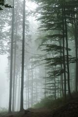 Keuken foto achterwand Bos in mist Green forest in a mysterious fog