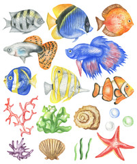 Set of fish, corals, seashells