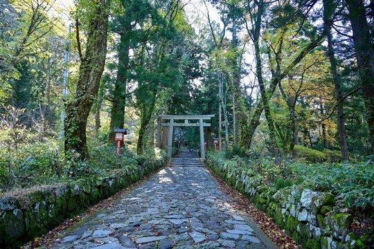 杉の大木に囲まれた神社の参道の情景@鳥取