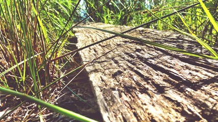 Fototapeta Close-up Of Wood Amidst Grassy Field During Sunny Day obraz