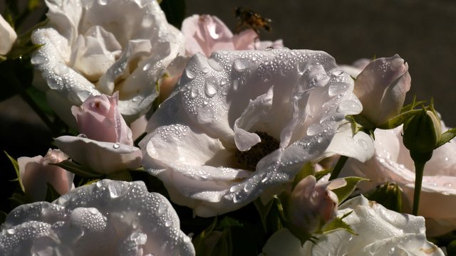 Close-up Of Wet Flowers Growing At Park