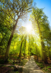 Bright sunrays beautifully falling through the trees of a park, with a path leading uphill towards...