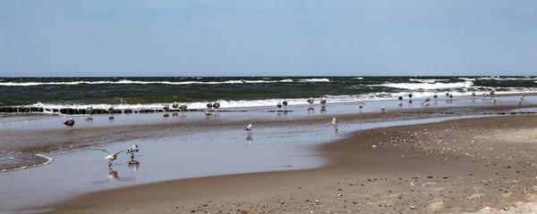 Mewy i falochron nad Morzem Bałtyckim w Międzyzdrojach