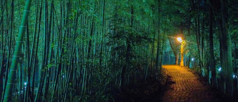 Walkway Amidst Trees At Night