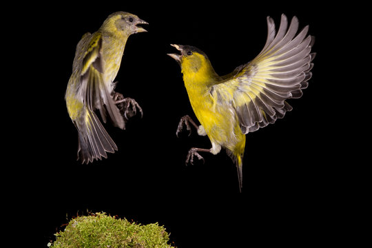 Low Angle View Of Birds Flying Against Sky At Night