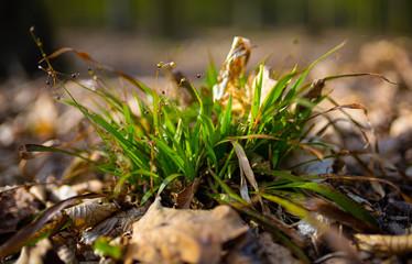Fototapeta ogromny korzeń trawy obraz