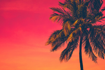 Canvas Prints Palm tree Golden tropical sunset with dark silhouette of coconut palm tree. Trendy vintage toned summer travel background with copy space. Retro style creative design concept. Open composition.