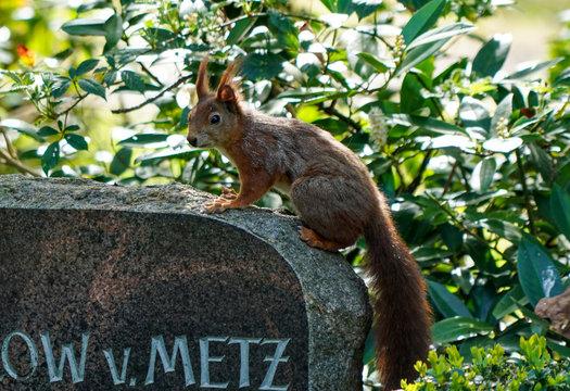 Eichhörnchen auf Grabstein
