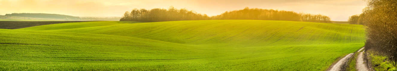Wall Mural - panoramic view of farmland in hilly countryside at sunset in spring