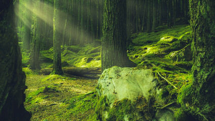 Deep Rich Green Forest With Magical Enchanting Light Rays In The Pacific Northwest