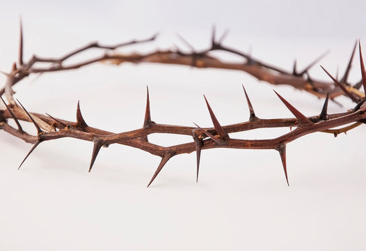 Crown of thorns isolated on white background, copy space (religion, Christianity, faith concept)