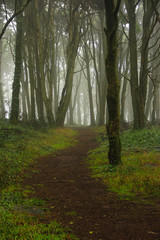 Amazing wood covered with mist