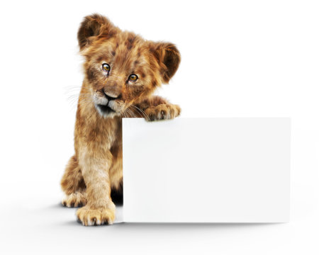 Adorable baby lion cub holding up a mock up blank white poster board for custom advertisement or text. 3d rendering on a white background