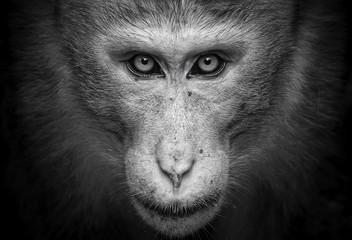 Fotorolgordijn Aap Close-up Portrait Of Monkey