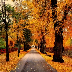 Canvas Prints Autumn Road Amidst Trees In Forest During Autumn