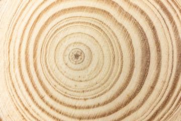 Closeup pine tree rings background