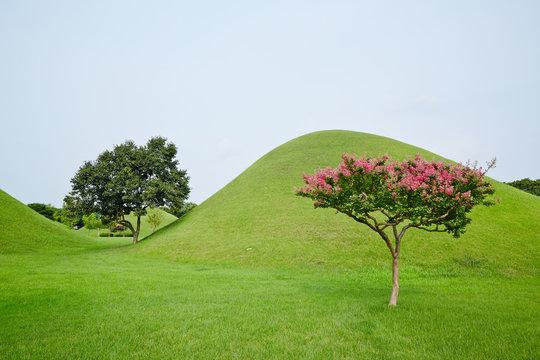 Daereungwon Ancient Tombs in Gyeongju-si, South Korea. Daereungwon ancient is the tomb of the Silla period.