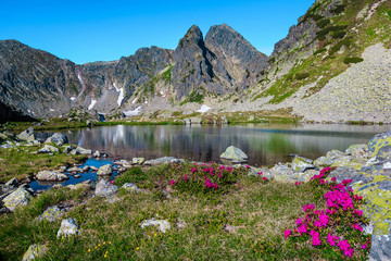 Wall Mural - Pink rhododendron bush and Taul Portii glacier lake, Retezat mountains