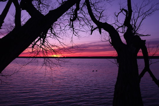 dark silhouette of a tree in foreground with pink, purple, orange, and yellow sunset at suny oswego college