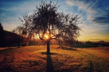 Foto auf Gartenposter Dunkelbraun Tree On Countryside Landscape