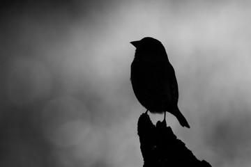 silhouette d'oiseau Fototapete