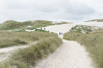 Fototapete - Dünenweg an der Nordseeküste
