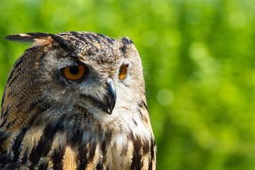 Close-up Of Owl Fototapete