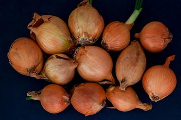 Bulwy cebuli.