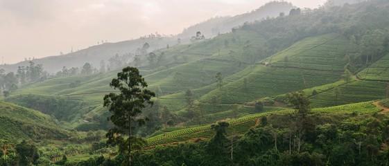 Foto auf AluDibond Khaki Scenic View Of Green Landscape Against Sky
