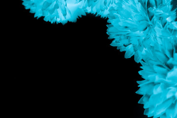 Beautiful abstract color black and blue flowers on black background and dark graphic white flower frame and blue leaves texture, blue background, colorful graphics banner  Fototapete