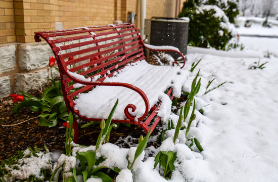 empty red bench in winter snow