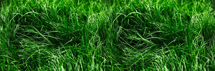 Natural green grass background, fresh lawn top view Fotobehang