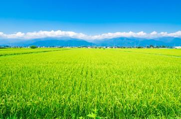Foto auf AluDibond Lime grun 夏の田園風景 安曇野