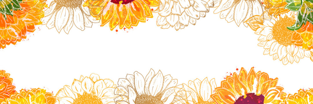 Vector panorama with watercolor sunflowers on a white background and copy space