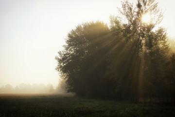 Sunbeams, tree and foggy morning Fototapete