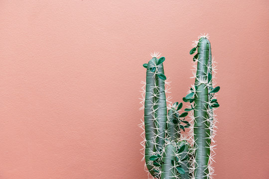 Green cactus on pink
