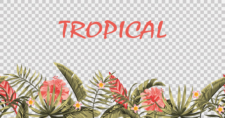 Wall Mural - Seamless tropical border vector transparent background