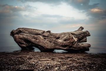 Fototapeta Nad brzegiem morza obraz