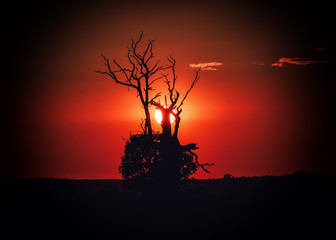 Autocollant pour porte Marron Sylwetki drzew podczas zachodu słońca