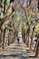 Foto auf Gartenposter Straße im Wald Barcelone