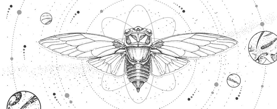 Modern magic witchcraft card with solar system and cicada. Hand drawing occult vector illustration