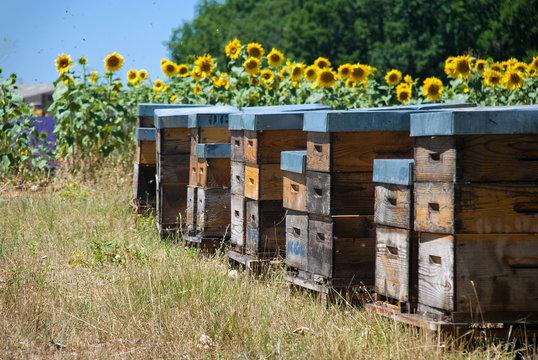 Bienenstock aus Holz vor Sonnenblumen im Sommer