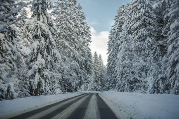 Wall Mural - Country Road In Forest Covered With Snow.