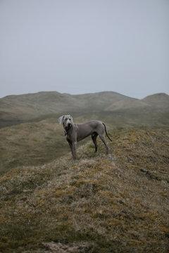 Dog in foggy hills