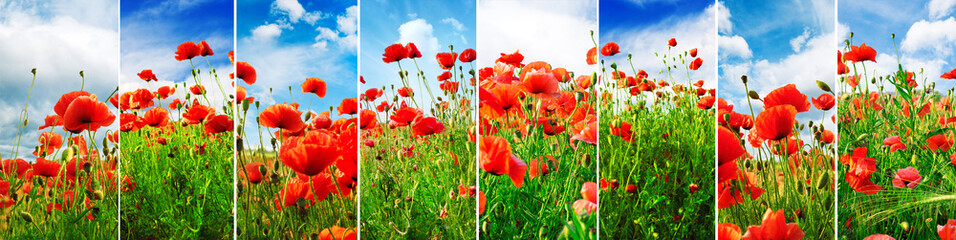 Wall Mural - Collage bright juicy landscapes poppy field