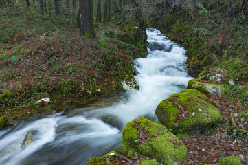 Spoed Fotobehang Bos rivier Forest path that runs parallel to the river da Fraga, in the town of Moaña, Galicia, Spain.