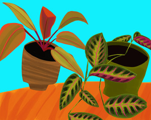 Prayer Plant and Philodendron