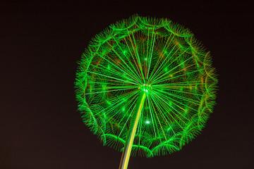 Grün in der Nacht