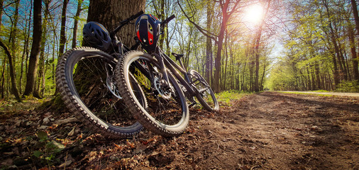 Two mountain bikes leaned on a tree next to a trail